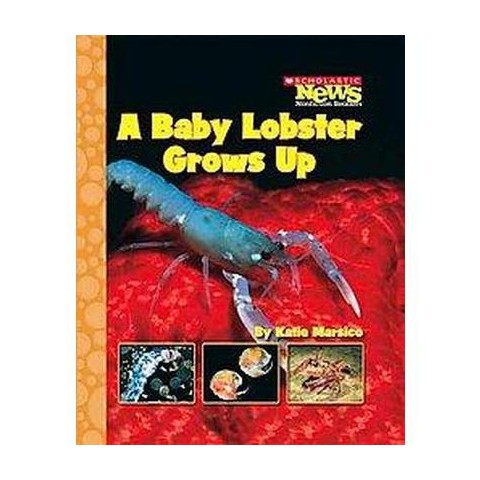 A Baby Lobster Grows Up (Paperback)