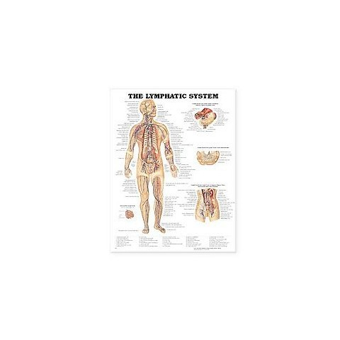 Lymphatic System Chart (Wallchart)