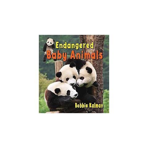Endangered Baby Animals (Hardcover)