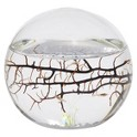 EcoSphere Closed Aquatic Ecosystem