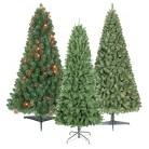 Alberta Spruce Christmas Tree Collection