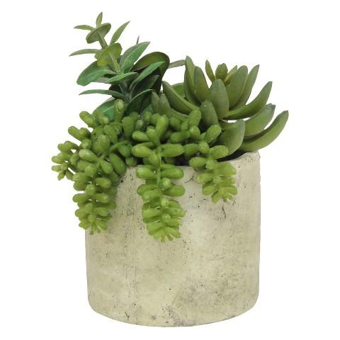 "Mixed Succulent Potted Table Arrangement; 7"""