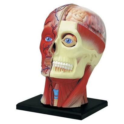 "John N. Hansen Human Head Anatomy Model-4.5"""