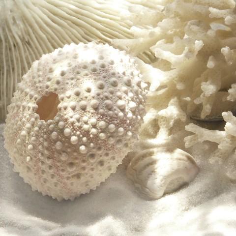 Art.com - Coral Shell I Art Print