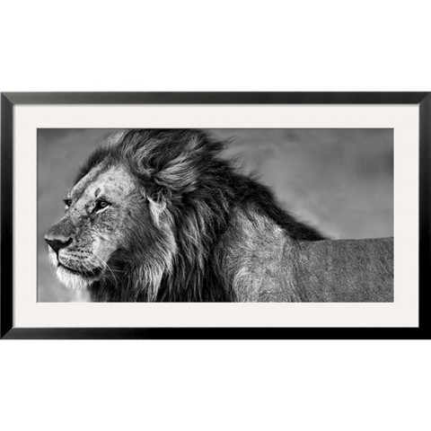 Art.com - Lion Eyes
