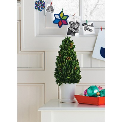 "Smith & Hawken® Boxwood Topiary in Ceramic Pot; 16"" height"