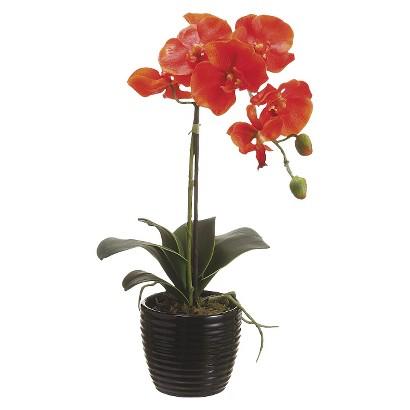 Orange Orchid in Ceramic Pot