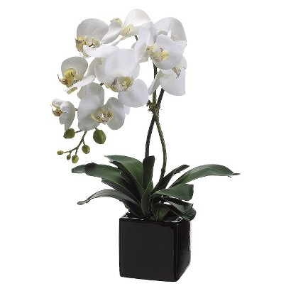 CREAM YELLOW ORCHID IN SQUARE CERAMIC POT