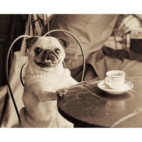 Art.com - Cafe Pug