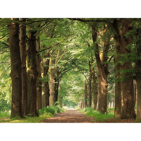 Art.com - Forest Path