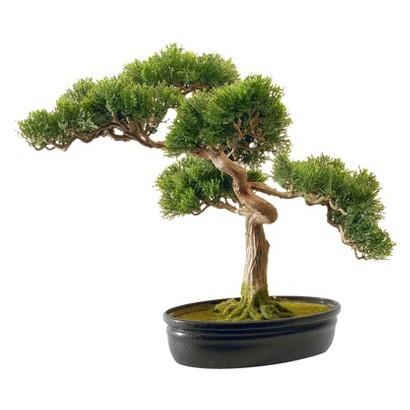 "16"" Cedar Bonsai w/ Oval Pot"