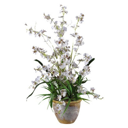 """Dancing Lady Orchid in Ceramic Pot 26"""" - Assorted Colors"""