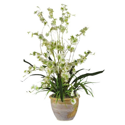 "Dancing Lady Orchid in Ceramic Pot 26"" - Assorted Colors"