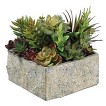 """Mixed Succulents in Gray Planter - 8"""""""