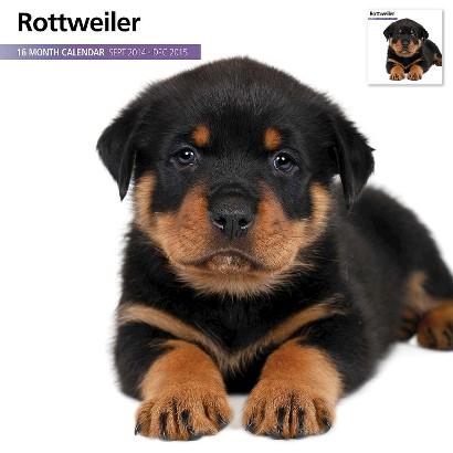 Magnet™ & Steel Rottweiler Dog 2015 Wall Calendar