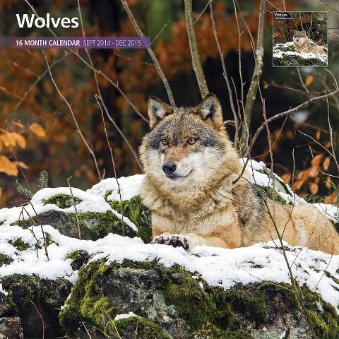 Magnet™ & Steel Wolves 2015 Wall Calendar
