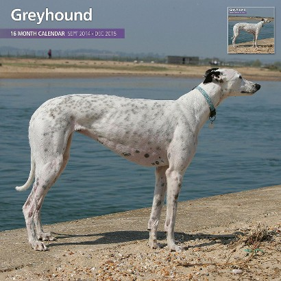 Magnet™ & Steel Greyhound Dog 2015 Wall Calendar