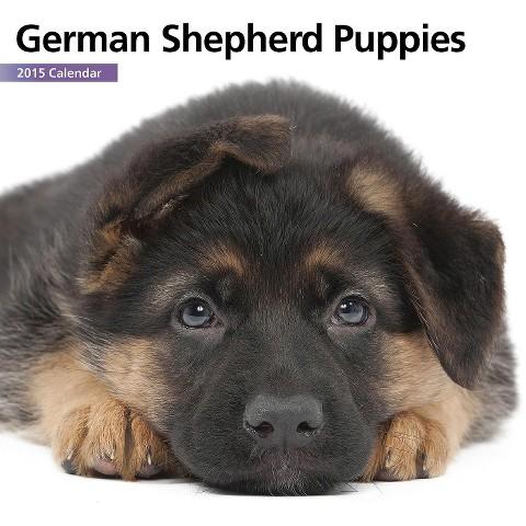 Magnet™ & Steel German Shepherd Puppies mini Dog 2015 Wall Calendar