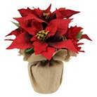Threshold™ Poinsettia Large
