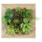 Threshold™ Mixed Succulent in Small Wooden Frame