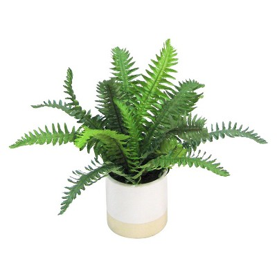 Threshold™ Small Fern in  Ceramic Pot