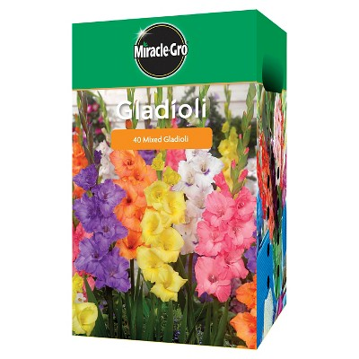 Miracle Gro Garden Bulbs - Assorted Gladiolus 40 Bulbs