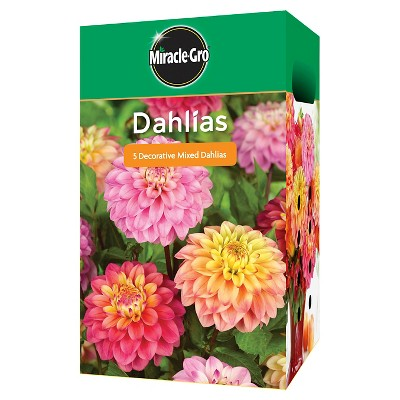 Miracle Gro Garden Bulbs - Assorted Dahlia 4 Bulbs, Lily 8 Bulbs