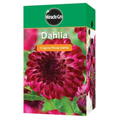Miracle Gro Garden Bulbs - Assorted Dahlia 1 Bulb