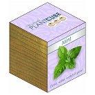 Ecofriendly PlantCube Mint