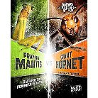 Praying Mantis Vs. Giant Hornet ( Bug Wars) (Hardcover)