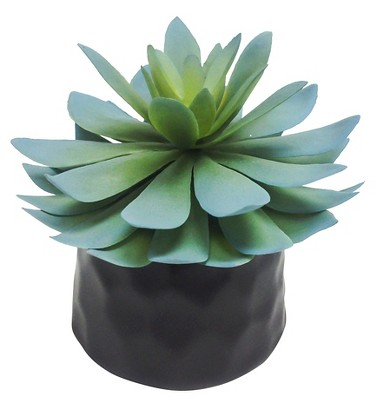 Mini Succulent Black - Room Essentials™