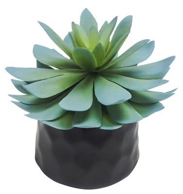 Mini Succulent Black - Room Essentials™