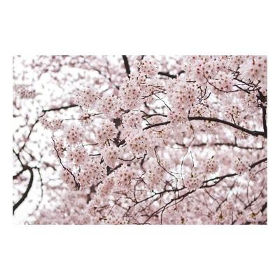 "Trademark Global Ariane Moshayedi 'Cherry Blossoms' Canvas Art - 16"" x 24"""